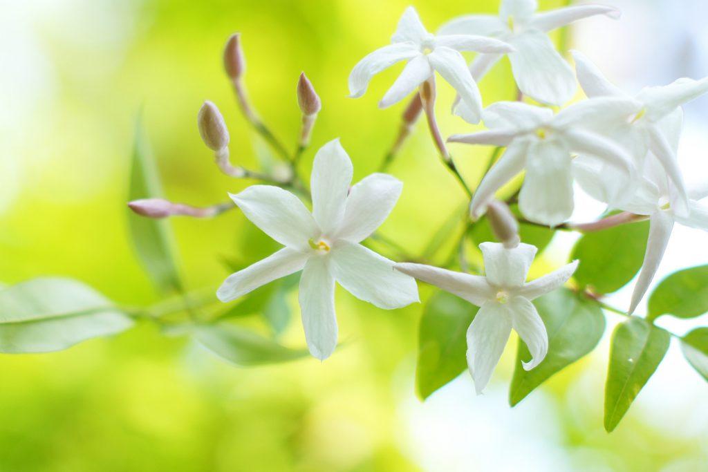 安心感をイメージさせる花