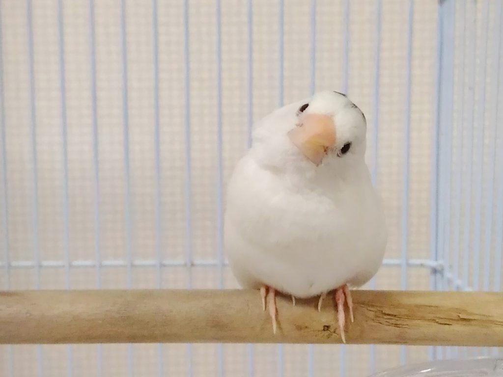 休業手当とは何かと首をかしげる鳥