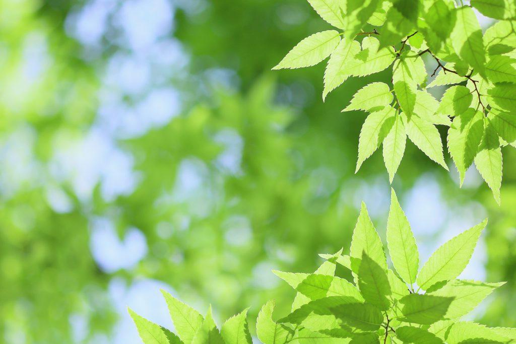明るい未来をイメージさせる新緑