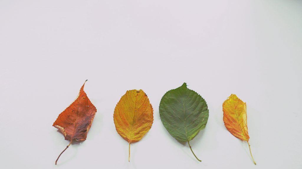 秋以降の動向について